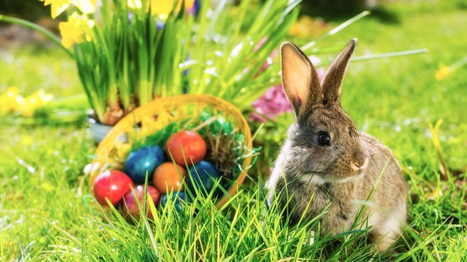 finding-easter-in-bunnies-and-baskets.jpg